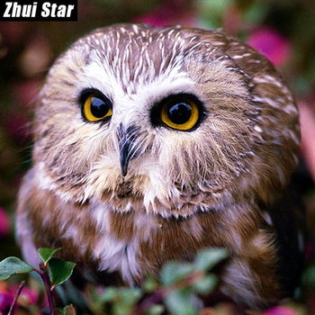 "Zhui Star Full Square Diamond 5D DIY Diamond Painting Photo Custom ""Animal Owl"" Embroidery Cross Stitch Mosaic Home Decor BK"